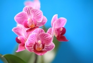orchidee_002