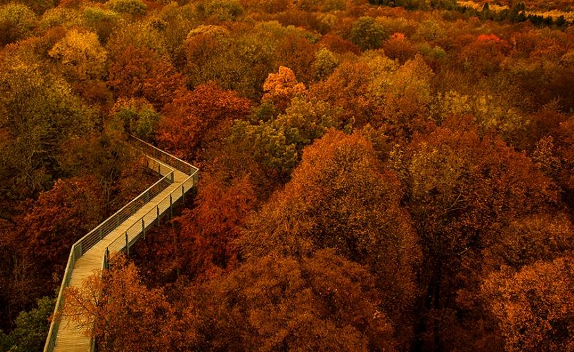 Über den Bäumen – Herbstwald im NationalparkHainich
