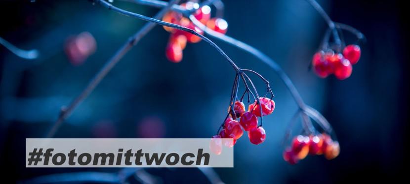 #fotomittwoch *046